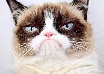 Самые популярные кошки в интернете