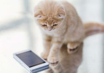Если у Вас живёт кот, это Вам точно пригодится!