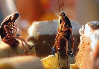 Возможно самые неприятные, но интересные факты о тараканах