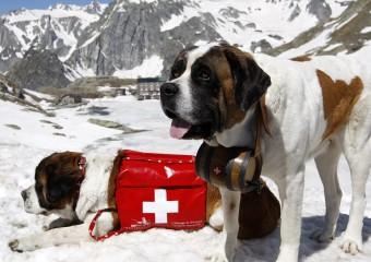 12 собак, которые стали известны по всему миру