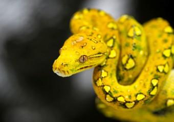 Прекрасное ужасное! Змеи, которые завораживают своим видом