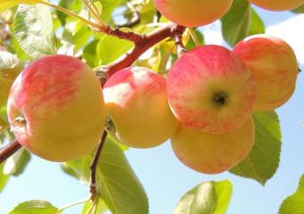 Как укрепить сердце? Доступные продукты для здоровья сердца и сосудов