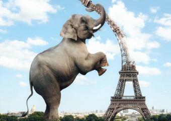Сюрреалистический фотопроект, в котором животные — хозяева мира!