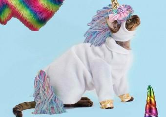 Забавные костюмы с Aliexpress для домашних любимцев