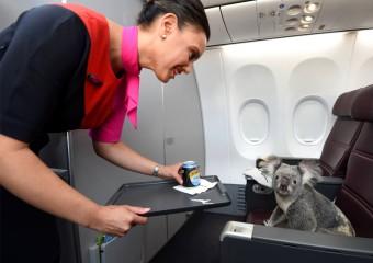 20 самых забавных и необычных животных-авиапассажиров