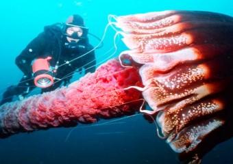 7 самых опасных медуз в подводном мире