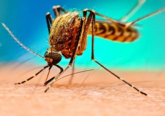 Из-за чего чешутся комариные укусы