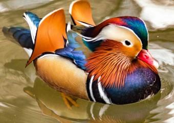 15 красивейших птиц, от вида которых замирает дыхание!