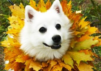 Озорные собаки в осенней листве
