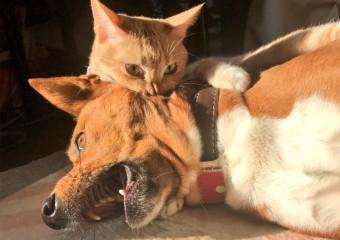 Забавные снимки непростых отношений между кошками и собаками