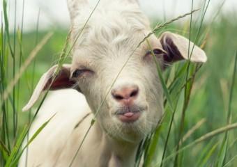 Смешные фото животных на фермах и в деревнях
